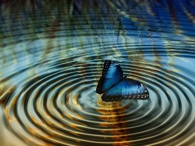 Picture of blue butterfly creating ripples on water surface